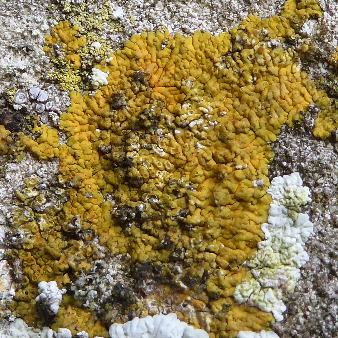 close up of lichen