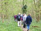 Bluebell walk at Wiston April 2015