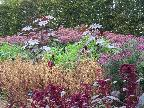 Colourful layers of planting