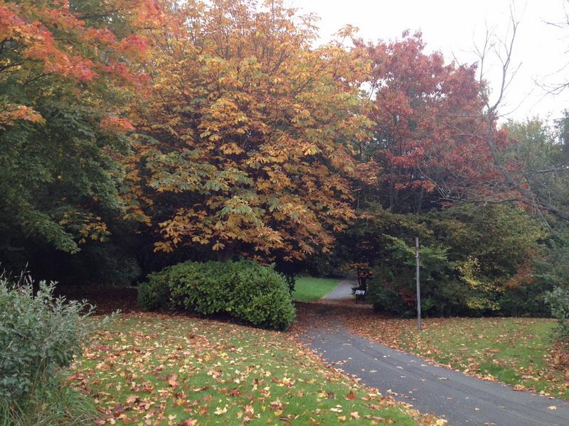 Autumn in Skelmersdale
