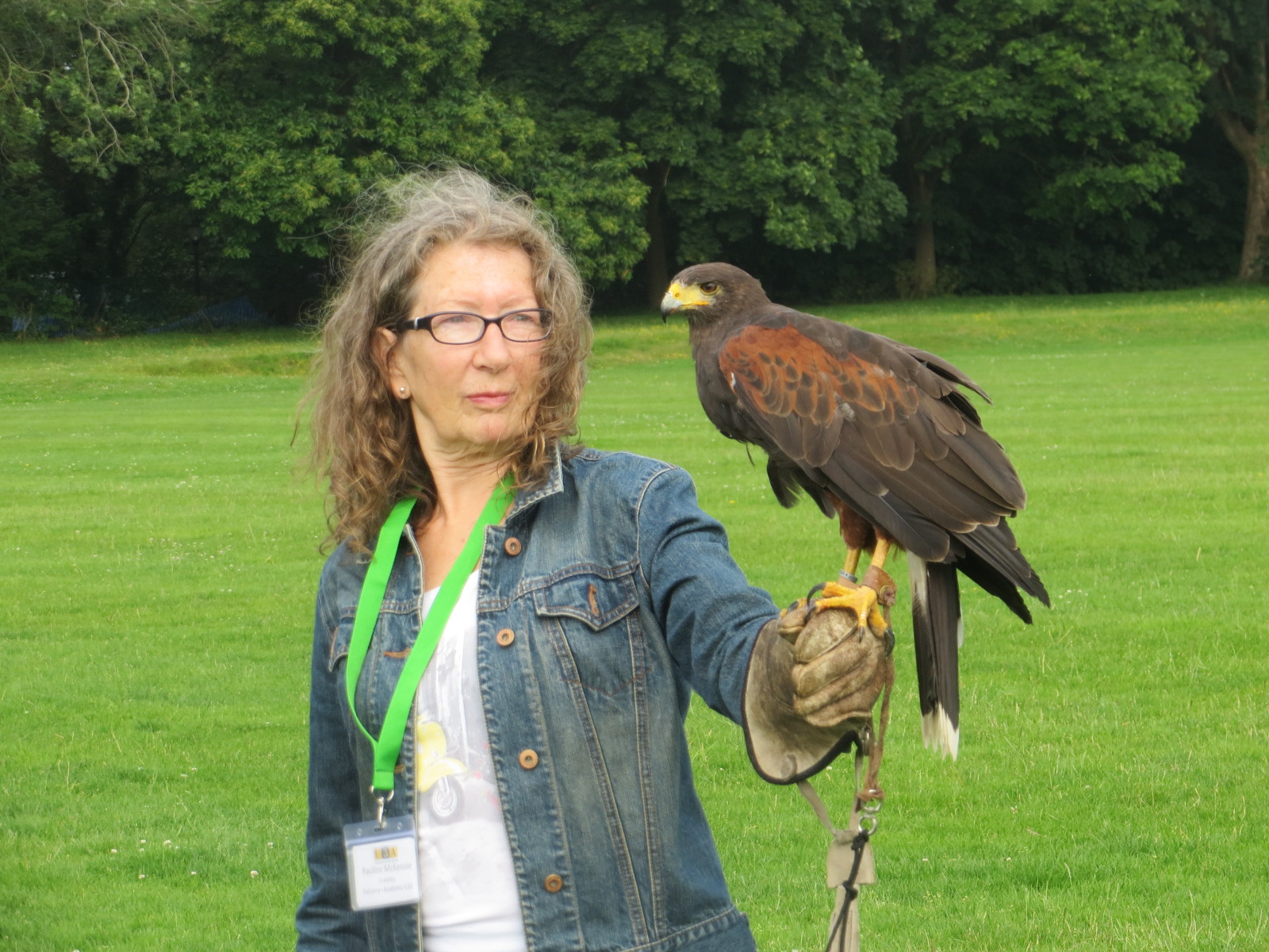 Falconry at Chichester in 2019