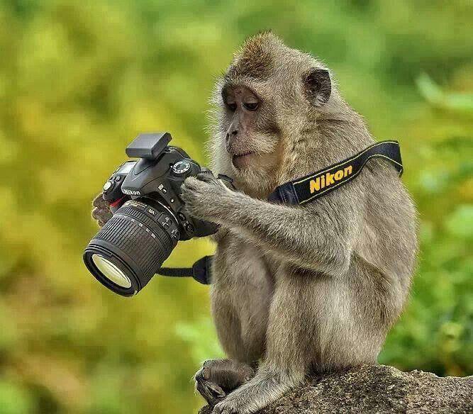 Shoot...