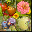 Flowers and Fruit Composite