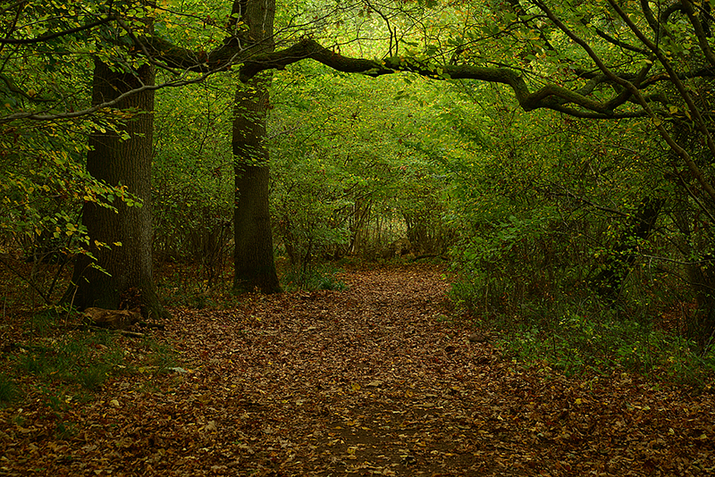 Salcey Forest in November