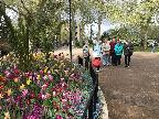 Beautiful tulips,Thames Path,Island Gdns