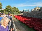 A visit to the poppy display at the Towe