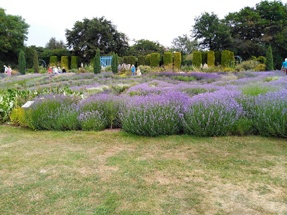 Visit to the Lavender Fields