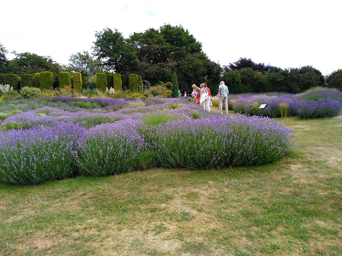 Yorkshire Lavender Fields visit