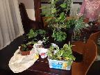 Plant swap at the Garden Group