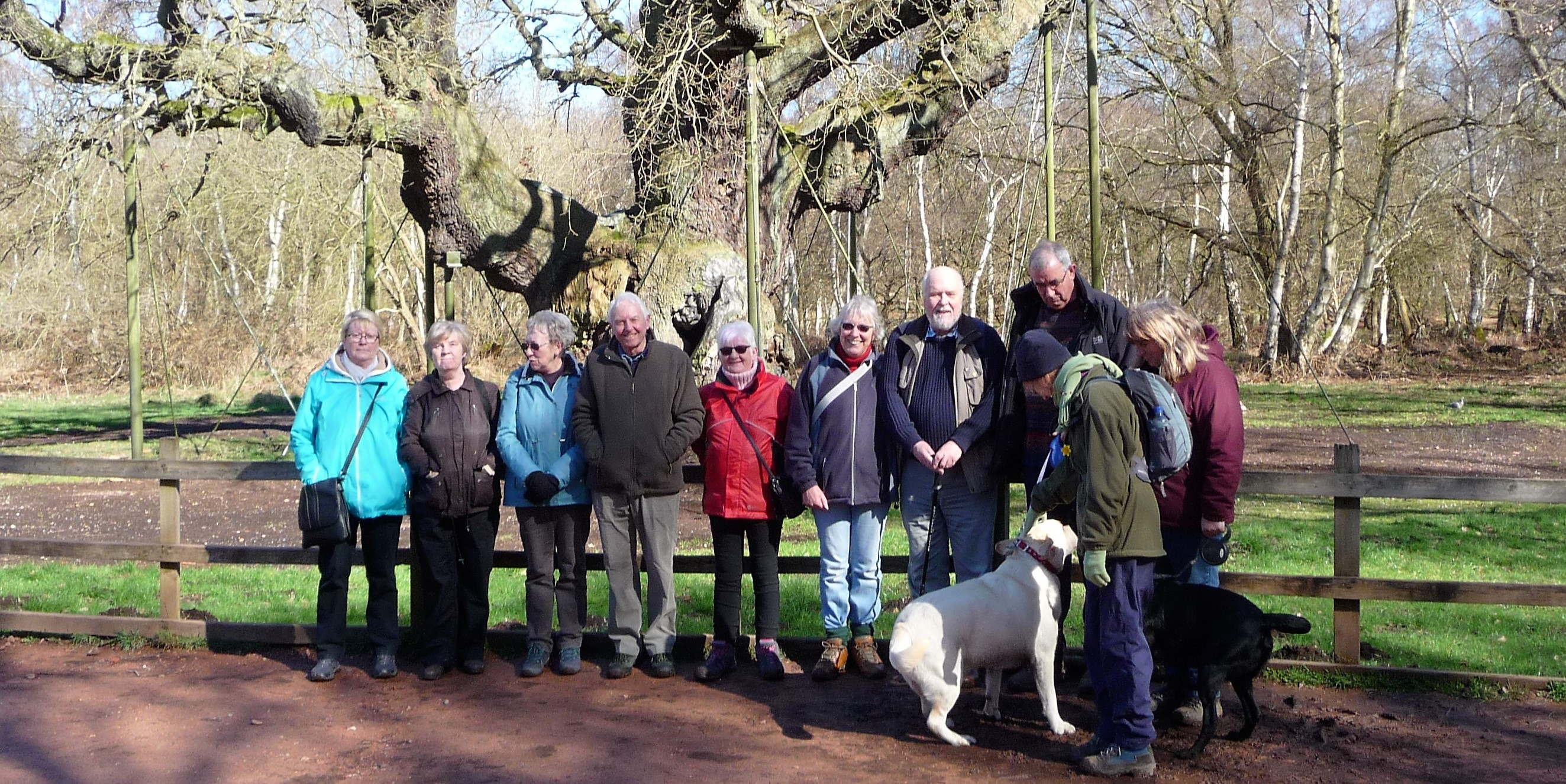 Medium Walking Group in Sherwood Forest