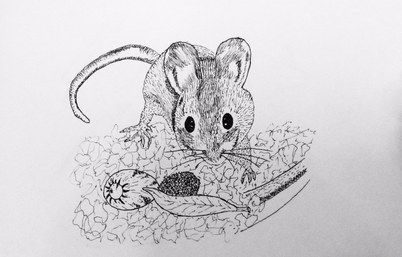 Pencil Drawing of Mouse