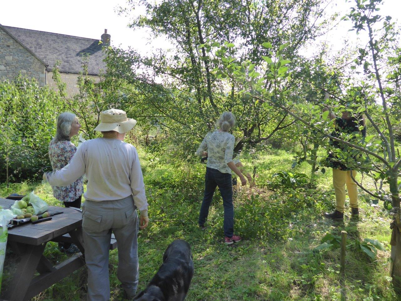 Pruning session in the Community Orchard