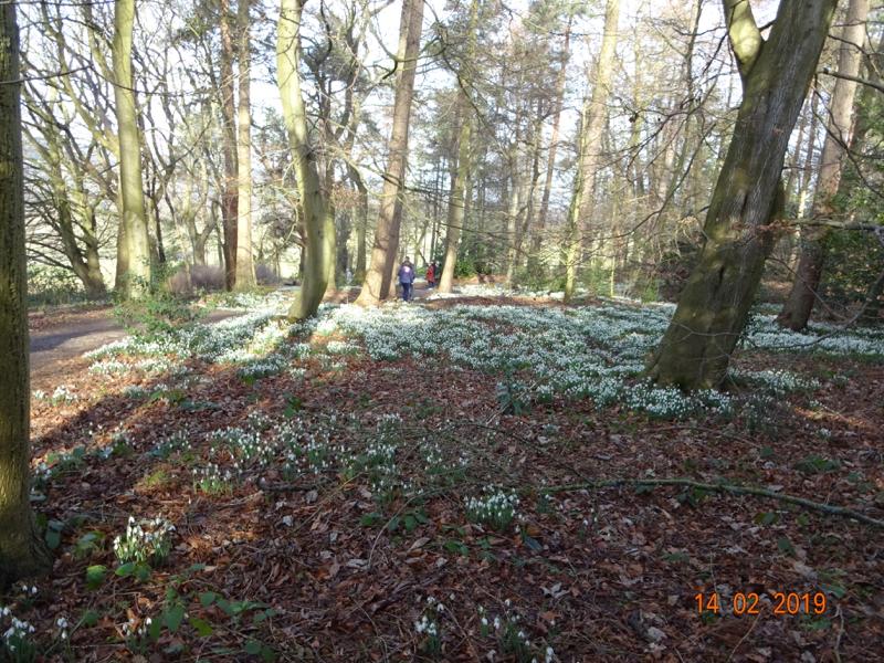 Snowdrop Walk - Chirk Castle 14th Feb